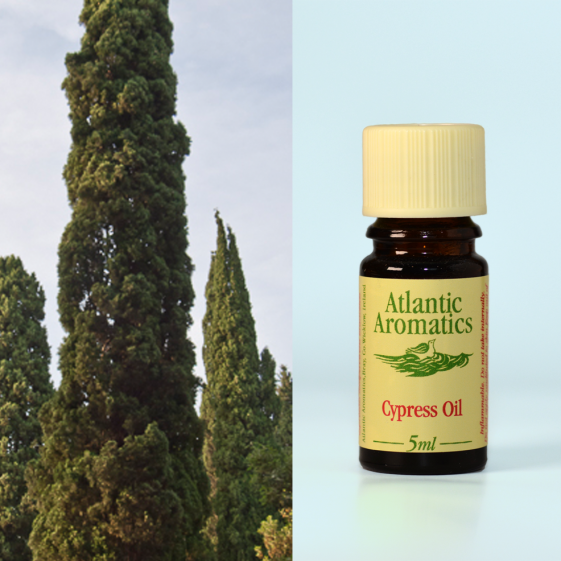 Atlantic Aromatics - Cypress Organic 3x5ml