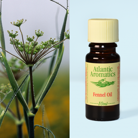 Atlantic Aromatics Fennel (Org) 3x10ml