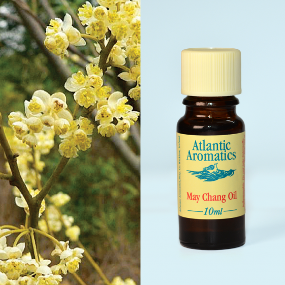 Atlantic Aromatics	May Chang	1x10ml