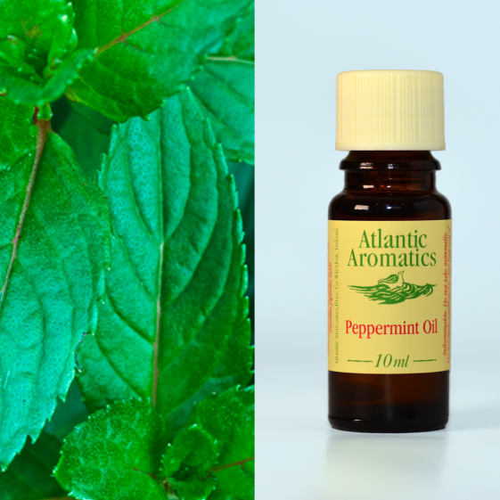 Atlantic Aromatics	Peppermint (Org)	3x10ml