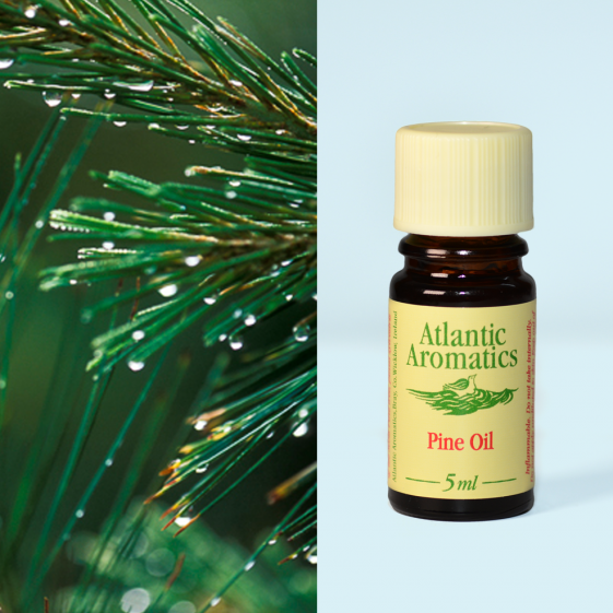 Atlantic Aromatics	Pine Scots (Org)	3x5ml