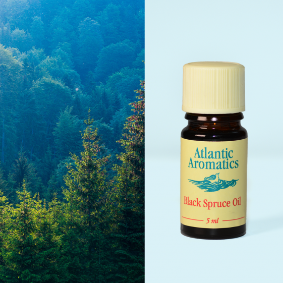 Atlantic Aromatics - Black Spruce 3x5ml
