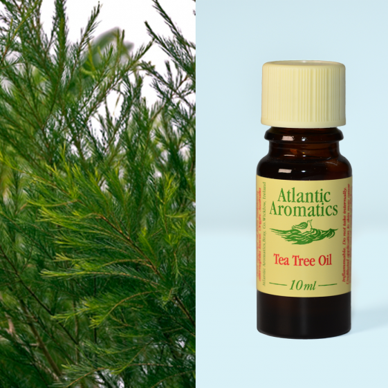 Atlantic Aromatics	Tea Tree (Org)	3x10ml