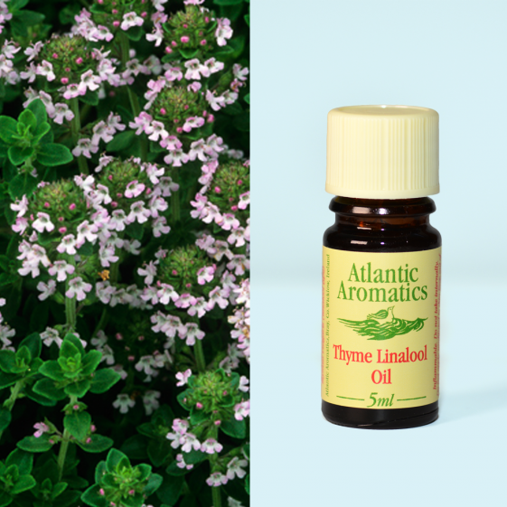 Atlantic Aromatics	Thyme Linalool (Org)	3x5ml