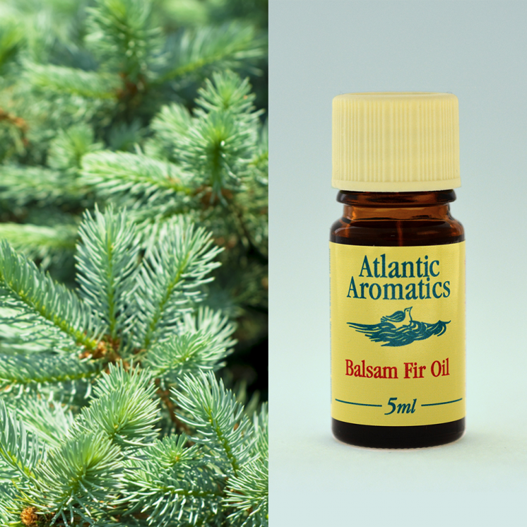 Atlantic Aromatics - Balsam Fir 5ml