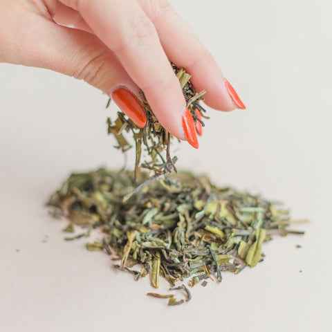 Hand sprinkling loose leaf white tea