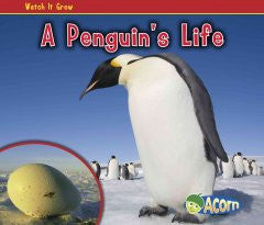 A Penguin's Life