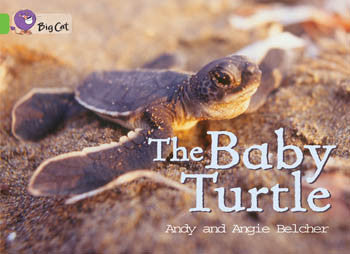The Baby Turtle - PL-7060