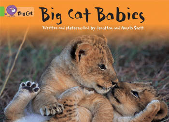 Big Cat Babies - PL-7074