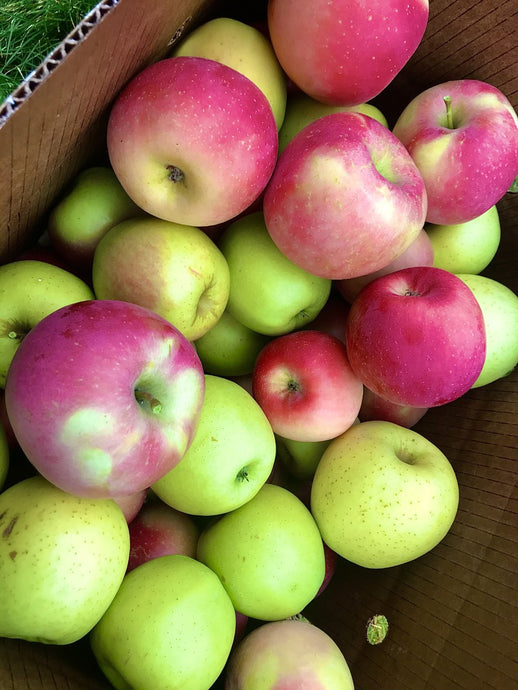 Fall Apples & Cider Recipes