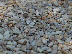 Patio (Low Millet) 20#