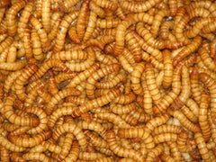 Mealworms (select count)