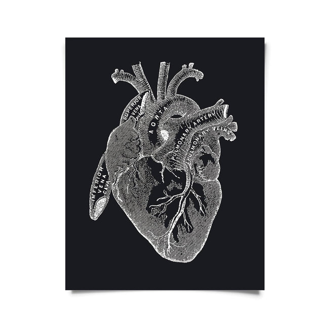 Vintage Anatomy Heart Diagram Black Print