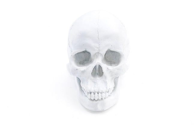 Large Human Anatomy - Table Top Skeleton Head- White