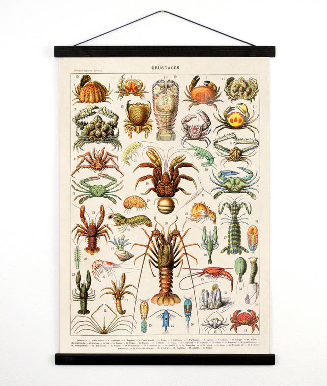 Curious Prints - Vintage Natural History French Crustaceans Canvas Hanging
