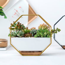 Görseli Galeri görüntüleyiciye yükleyin, Pots and planters to furnish your room with fresh greenery or flowers. Varieties of decorative indoor planters & plant pots to find the perfect planter for your style from tabletop pots to floor standing, hanging baskets and more.