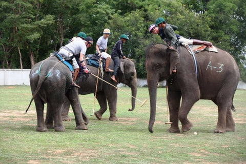 Polo action during the 2016 Elephant Story Invitational Tournament in Thailand in June