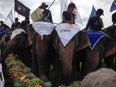 Elephants enjoy a meal after a pachyderm polo tournament in Bangkok, Thailand.
