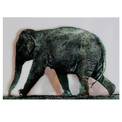 Animated Elephant Postcard