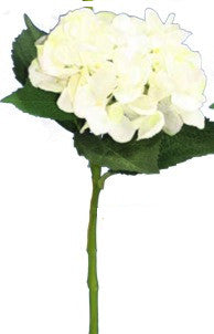 Water Stem Hydrangea Pure White