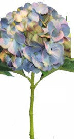 Water Stem Hydrangea Light Blue
