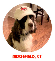 The Crest Cap Sightings of Dog In Ridgefield Connecticut
