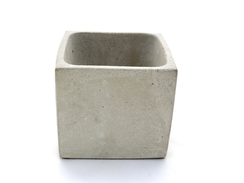 Bring Nature inside small concrete planter, modern home decor