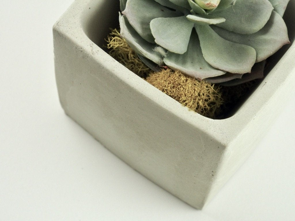 Concrete Planter with succulent view from top, modern home decor