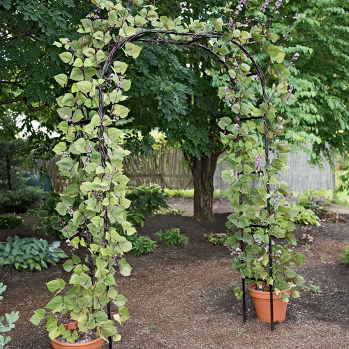 Titan Garden Arch 7' Tall Black Metal
