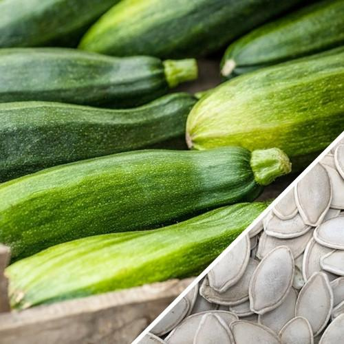Zucchini Seeds Black Beauty Squash