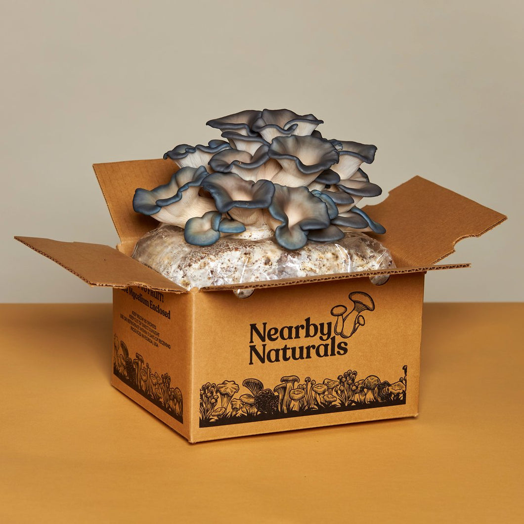 Blue Oyster Mushroom Grow Kit