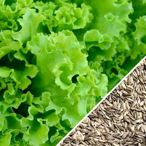 Lettuce Seeds Green Salad Bowl Mix, Heirloom, Organic, Non-GMO