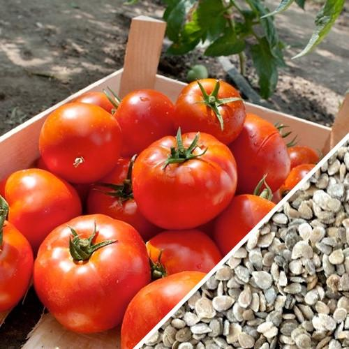 Tomato Seeds Caribe Heirloom, Organic, Non-GMO