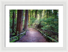 Load image into Gallery viewer, A Light In The Redwods - Framed Print - Santa Cruz Art Prints