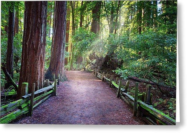 A Light In The Redwods - Greeting Card - Santa Cruz Art Prints