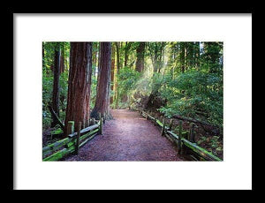 A Light In The Redwods - Framed Print - Santa Cruz Art Prints
