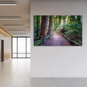 A Light in the Redwoods - Office Wall Art Print