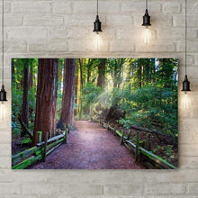 Load image into Gallery viewer, A Light In The Redwods - Acrylic Print - Santa Cruz Art Prints