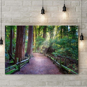 A Light In The Redwods - Acrylic Print - Santa Cruz Art Prints