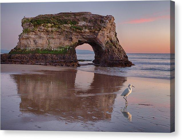 White Bird - Canvas Print - Santa Cruz Art Prints