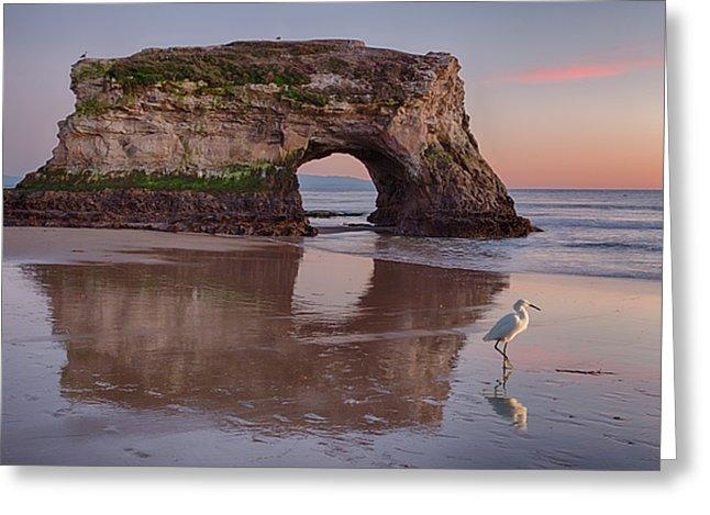 White Bird - Greeting Card - Santa Cruz Art Prints