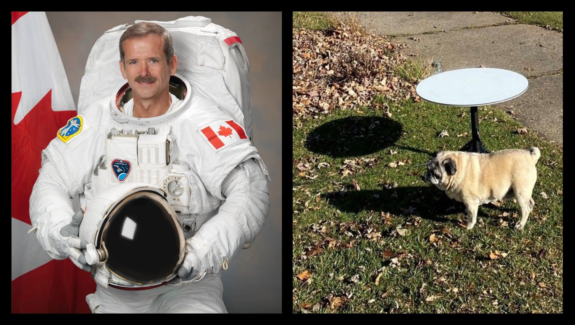 Former Canadian Astronaut is a SpaceX Starlink Internet Beta Tester