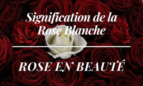 Signification rose blanche