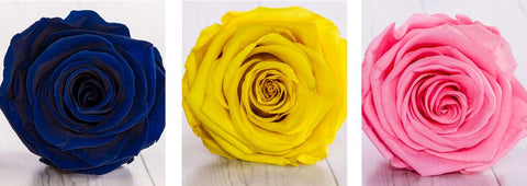 Rose eternelle bleue jaune rose