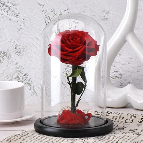ROSE ROUGE ETERNELLE SOUS CLOCHE