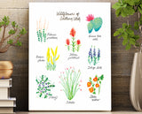 Desert wildflowers of Southern Utah unframed wall art print 8.5 X 11