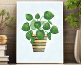 Wall Art Unframed 8.5 X 11 Print - House Plant Series