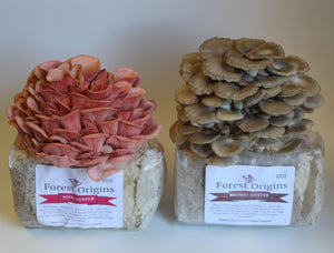PINK AND BROWN MUSHROOM GROW KIT