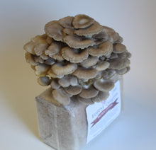 Load image into Gallery viewer, SPECIALTY TRIO MUSHROOM GROW KIT