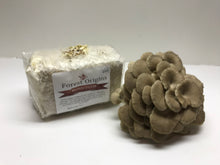 Load image into Gallery viewer, BROWN OYSTER MUSHROOM GROW KIT